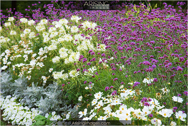 flowers in the summer at cranbrook house and gardens