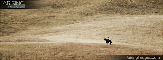 Cowboy in Custer State Park