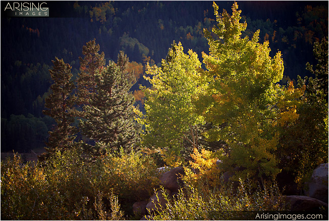 Fall Color, Rocky Mountain National Park