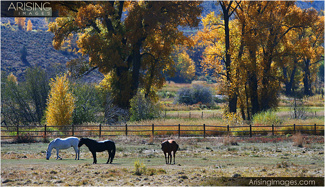 Fall color and horses in Colorado