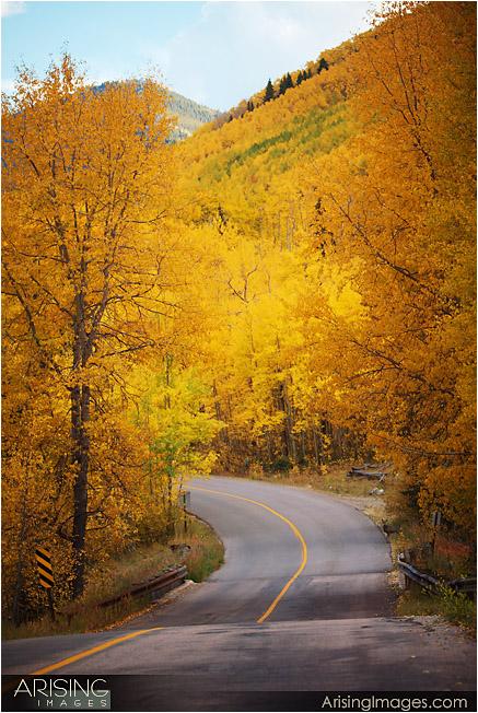 Fall color near Aspen