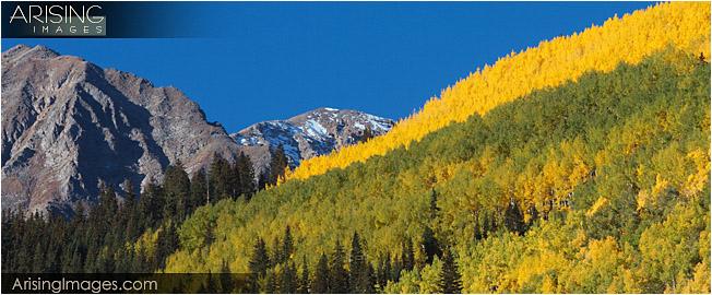 Fall Color near Ashcroft, CO