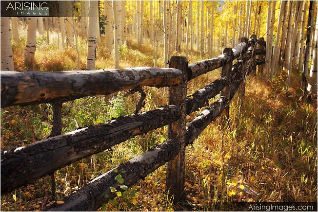 Log fence and aspen grove near Ashcroft, CO