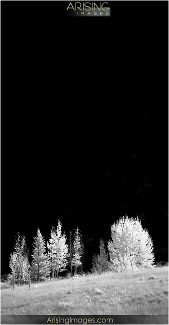 Infrared tree photo in Ashcroft, CO