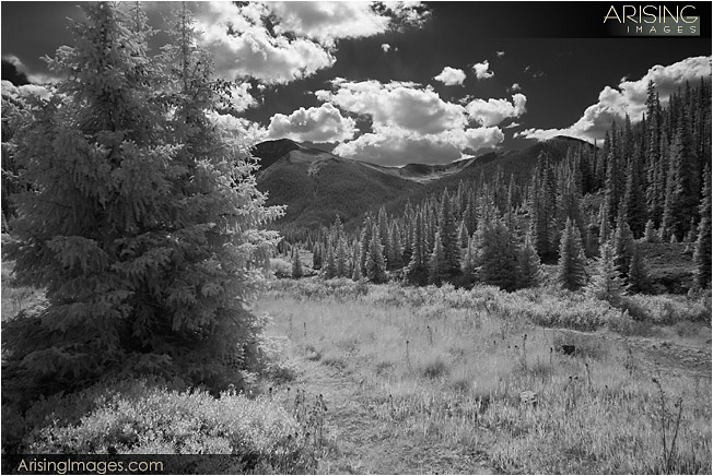 Infrared trees near Independence Pass, CO