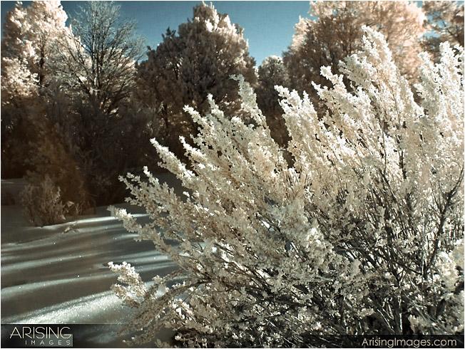 Canyon De Chelly - Infrared