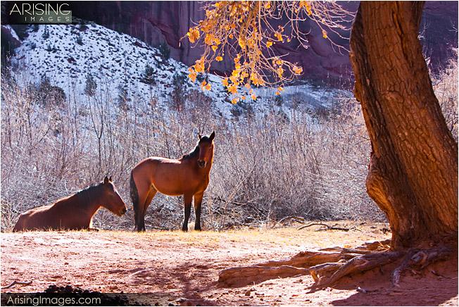 Canyon De Chelly - Horses