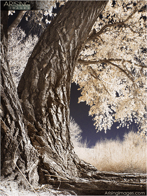 Canyon De Chelly - infrared trees