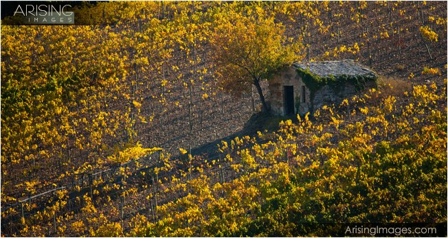 Fall color in the Tuscany region of Italy