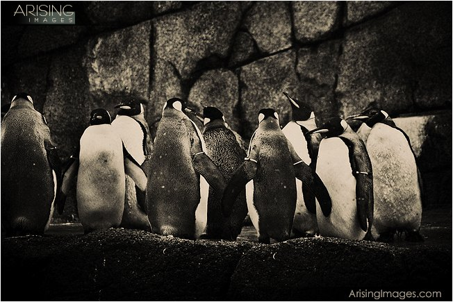 photos of penguins