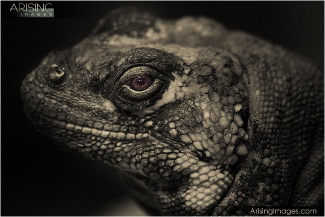 photos of lizards