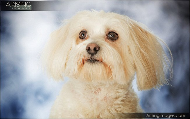 best pet photography in michigan