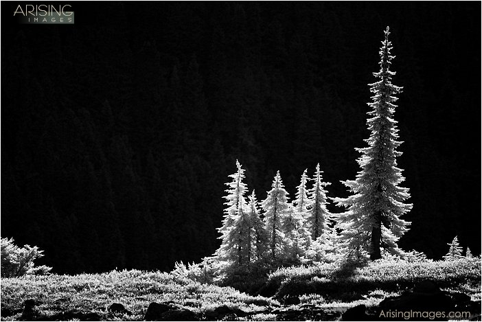 infrared photo of trees near mt. baker, washington