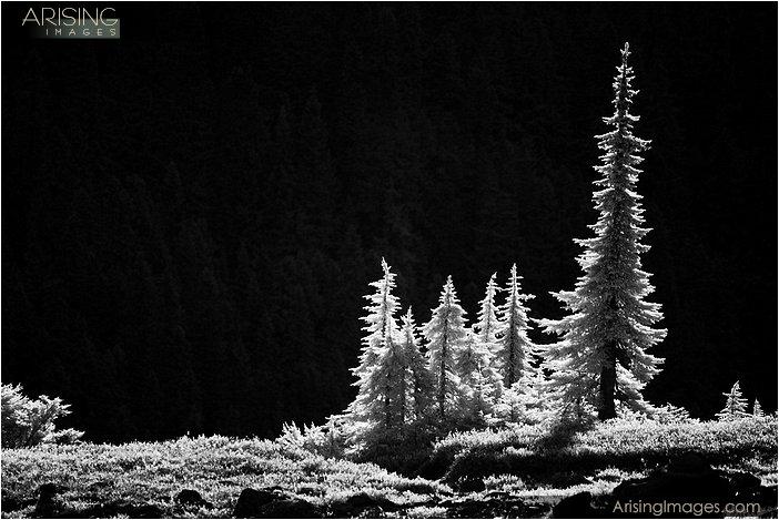 infrared photo of trees near mt. baker, washington