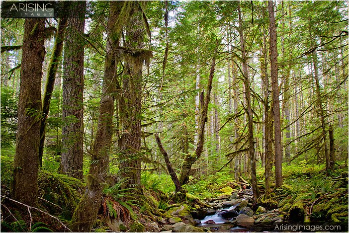forest near nooksack falls in washington