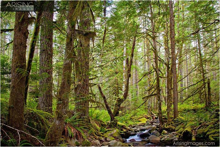 forest near nooksack falls in washington