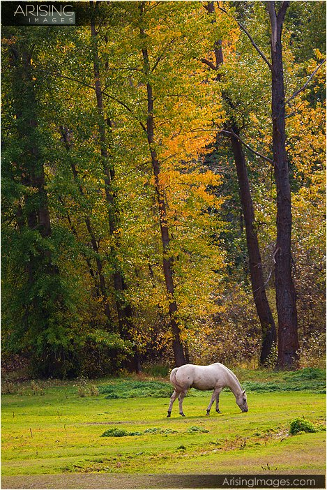 horse grazing on a ranch in central washington