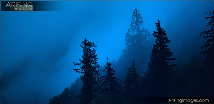 Mist and rain clouds on the pine trees before sunrise