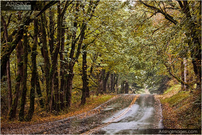 wet roads and fall color in northern Oregon