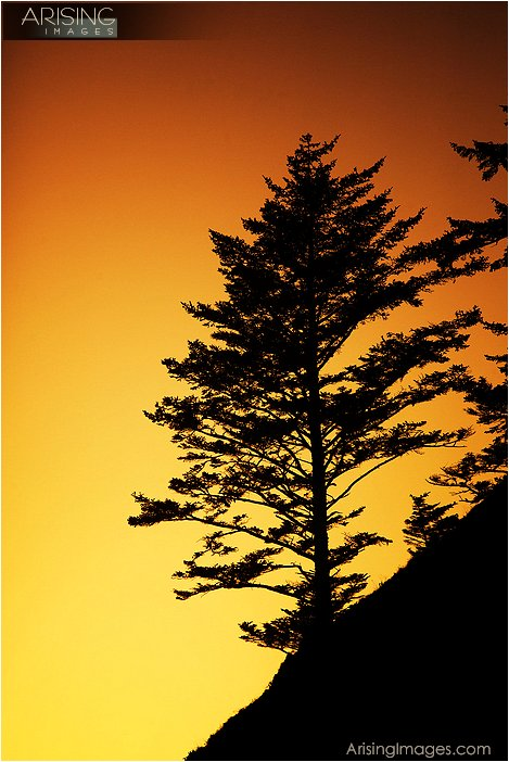 sun setting behind a tree on the sea stacks at second beach in olympic national park in washington