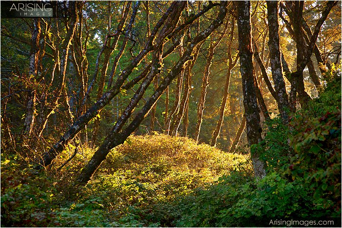 sunrise photos in the forest in Olympic peninsula in northwestern Washington