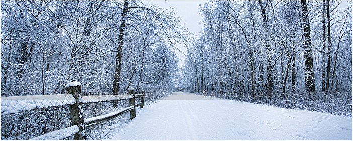 snow covered trail in a michigan winter
