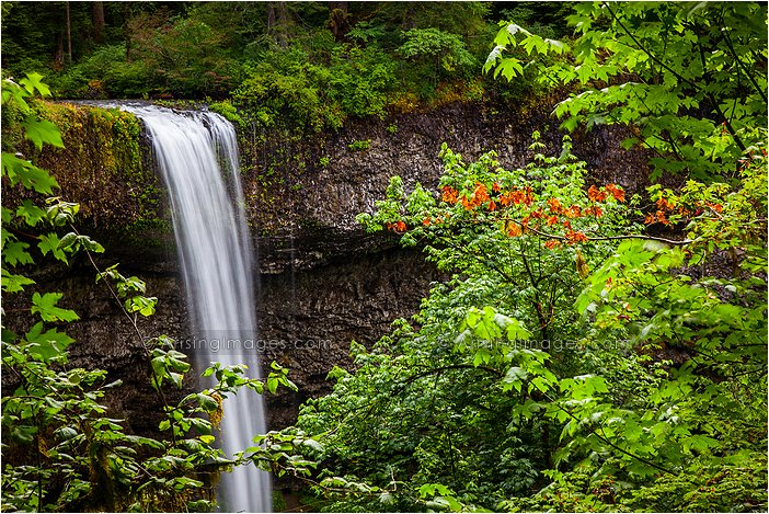 silver creek falls, OR