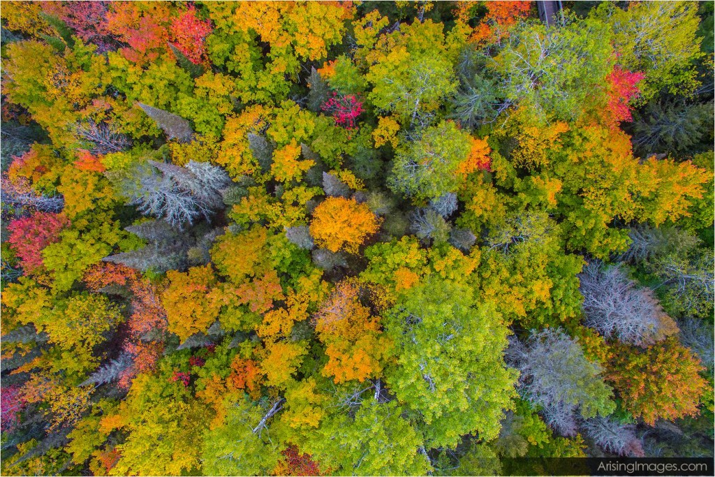 Fall color in northern Michigan