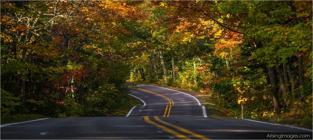 Highway 41 tunnel of trees, mi