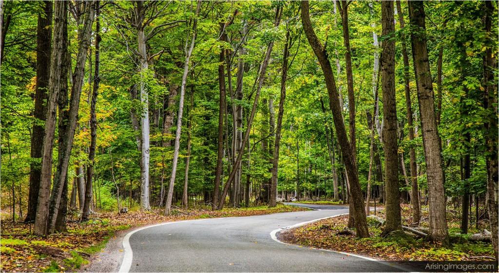 Tunnel of trees, MI